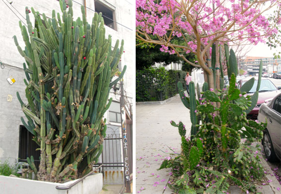 Left: a huge cactus in Los Angeles Arts District. Photo credit fashionsphinx.com