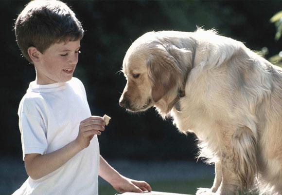 Alimentar a las mascotas es un acto de responsabilidad. Foto: www.understood