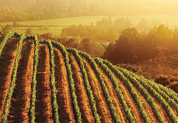 California Wine Month 3
