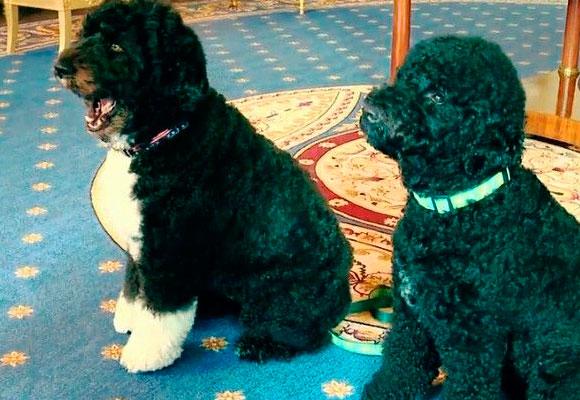 Bo y Sunny, habitantes de la Casa Blanca