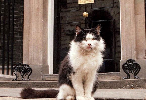 El gato Humphrey estuvo a punto de ser atropellado por Clinton