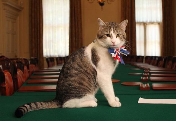 Larry es el gato de David Cameron