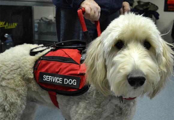 Perro guía para personas ciegas o sordo-ciegas