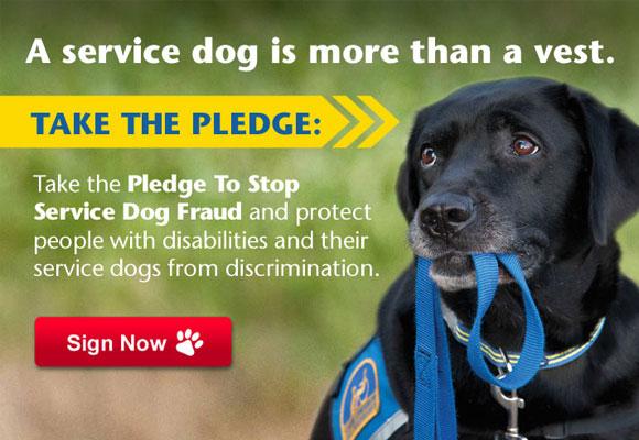 Campaña contra la suplantación de perros de asistencia