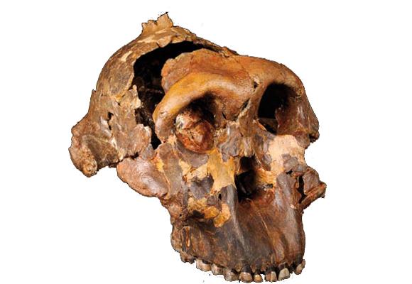 La cuna de la humanidad, una expo para descubrir nuestros orígenes
