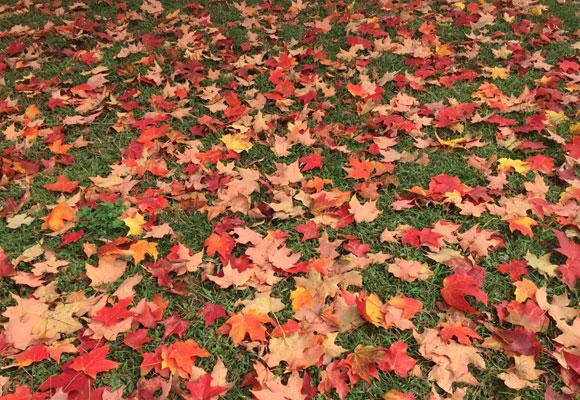 El naranja es uno de los colores del otoño