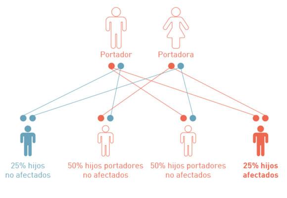 Transmisión de las enfermedades genéticas hereditarias