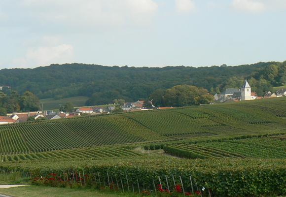 Las mágicas laderas de los viñedos de la Champagne