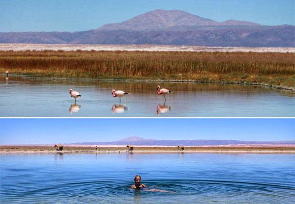 Flamencos en la Laguna Céjar y Carla bañándose en la Laguna