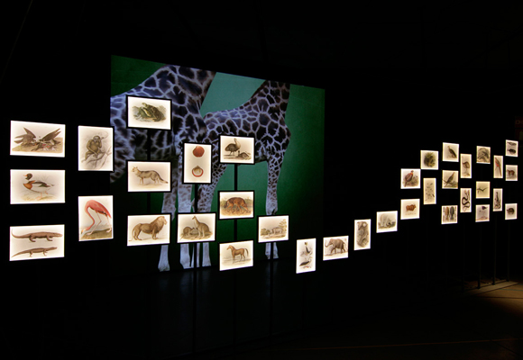 El visitante se convierte en un explorador más en esta exposición