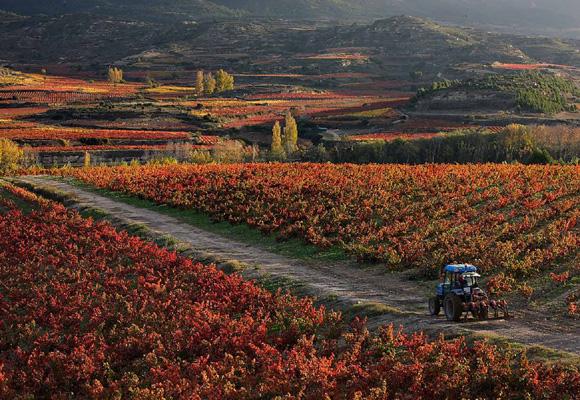 Descubre La Rioja desde otro punto de vista más familiar
