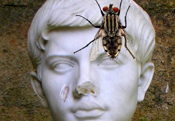 Virgilio y su mosca