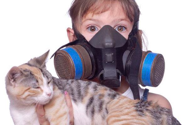 Lo que produce la mayoría de las alergias a los gatos es una proteína