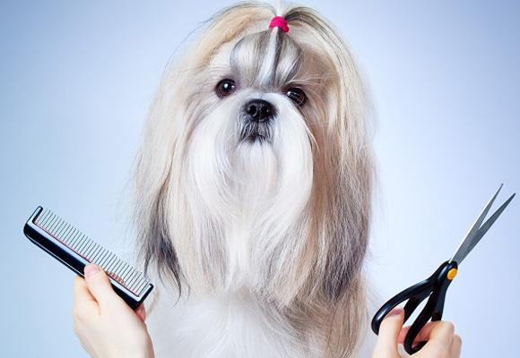 Hazle un corte de pelo en su peluquero canino