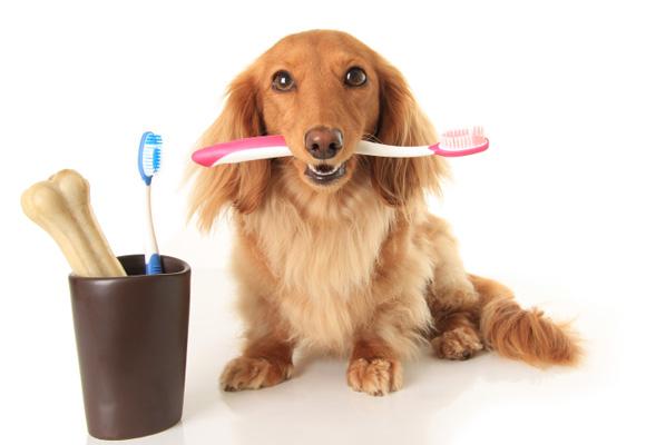 La limpieza dental es fundamental. Consulta a tu veterinario