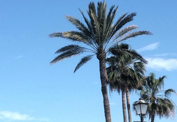 El clima de Canarias, perfecto para la producción de tabaco