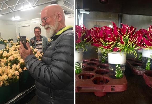 David fotografiando rosas Meier y gloriosas de Richard van Ruite (a la dcha)