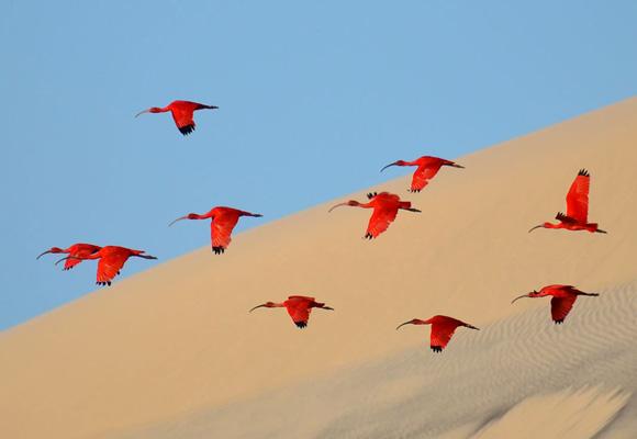 Cien imágenes espectaculares de naturaleza viva