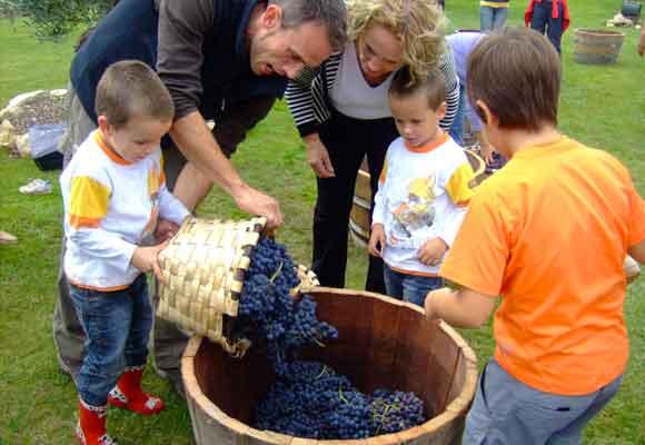 Los niños participan de la vendimia junto a los mayores