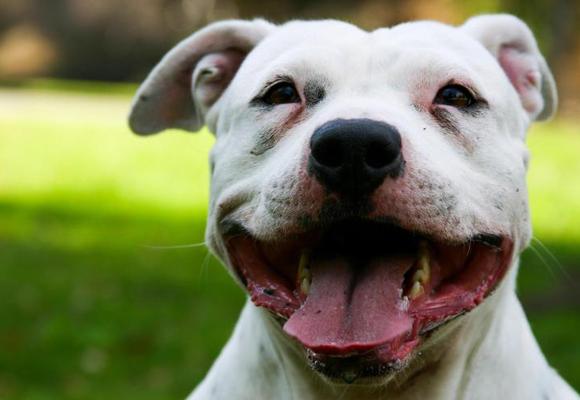 Vigila los jadeos de tu perro cuando salgas a correr con él