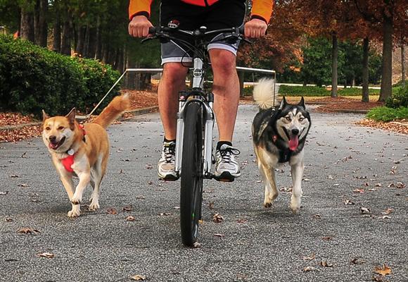 Hacer deporte con tu mascota, un reto muy divertido y saludable
