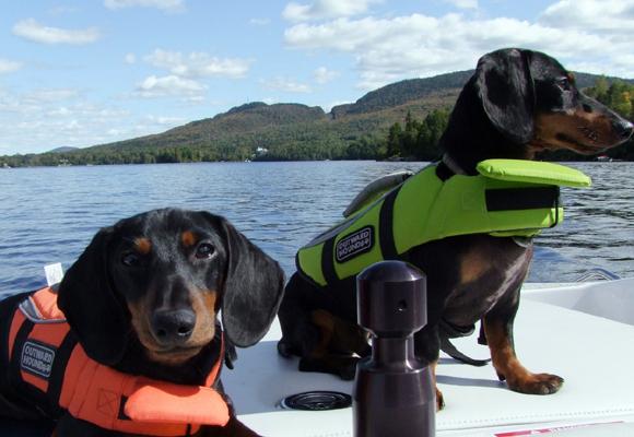 Equipa a tu perro si vas a salir al mar con él