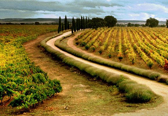 Los viñedos del Marqués de Griñón