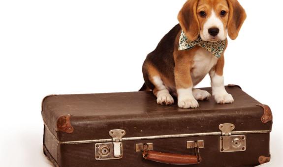 Viaja seguro con tu mascota