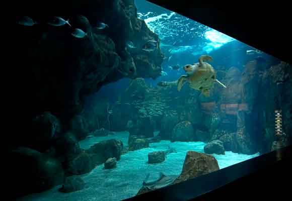 Los niños quedarán encantados tras visitar el acuario de Gijón