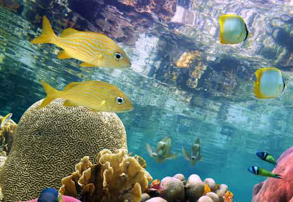 Las profundidades marinas guardan tesoros increíbles