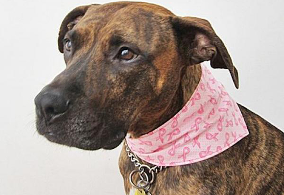 Think pink ribbon Perro con bandana solidaria