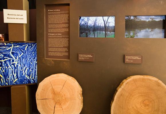 """Exposición """"El Bosque. Mucho más que madera"""""""