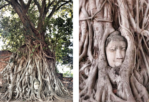 Templo de Wat Maha That en Ayutthaya