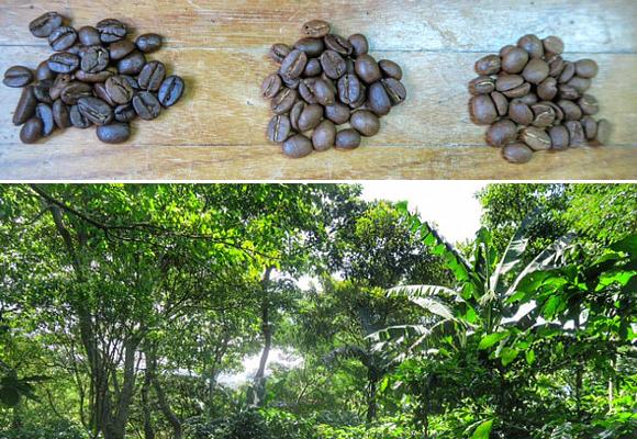 el-tostado-del-cafe-marca-la-diferencia-de-intensidades-suave-medio-o-fuerte