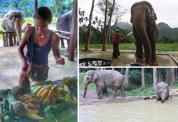 en-elephant-hill-aprenderemos-del-habitat-y-cuidado-de-los-elefantes