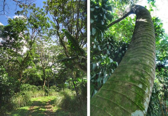 la-plantacion-rosa-blanca-se-encuentra-protegida-por-mas-de-50-especies-de-arboles-2