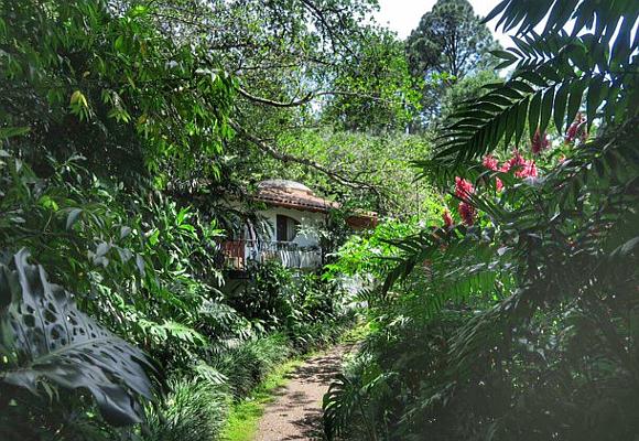 las-suites-del-hotel-finca-rosa-blanca-estan-escondidas-entre-la-vegetacion