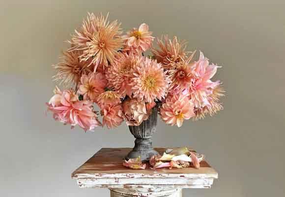 Una composición sublime en tonos rosa pálido con dalias, rosas y crisantemos. Fotografía Christin Geall