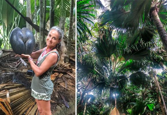 Coco de mer, la semilla más grande del mundo puede llegar a pesar 25 kilos. Están protegidas.sensual símbolo del archipiélago.